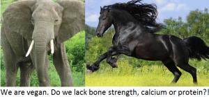 elehorse